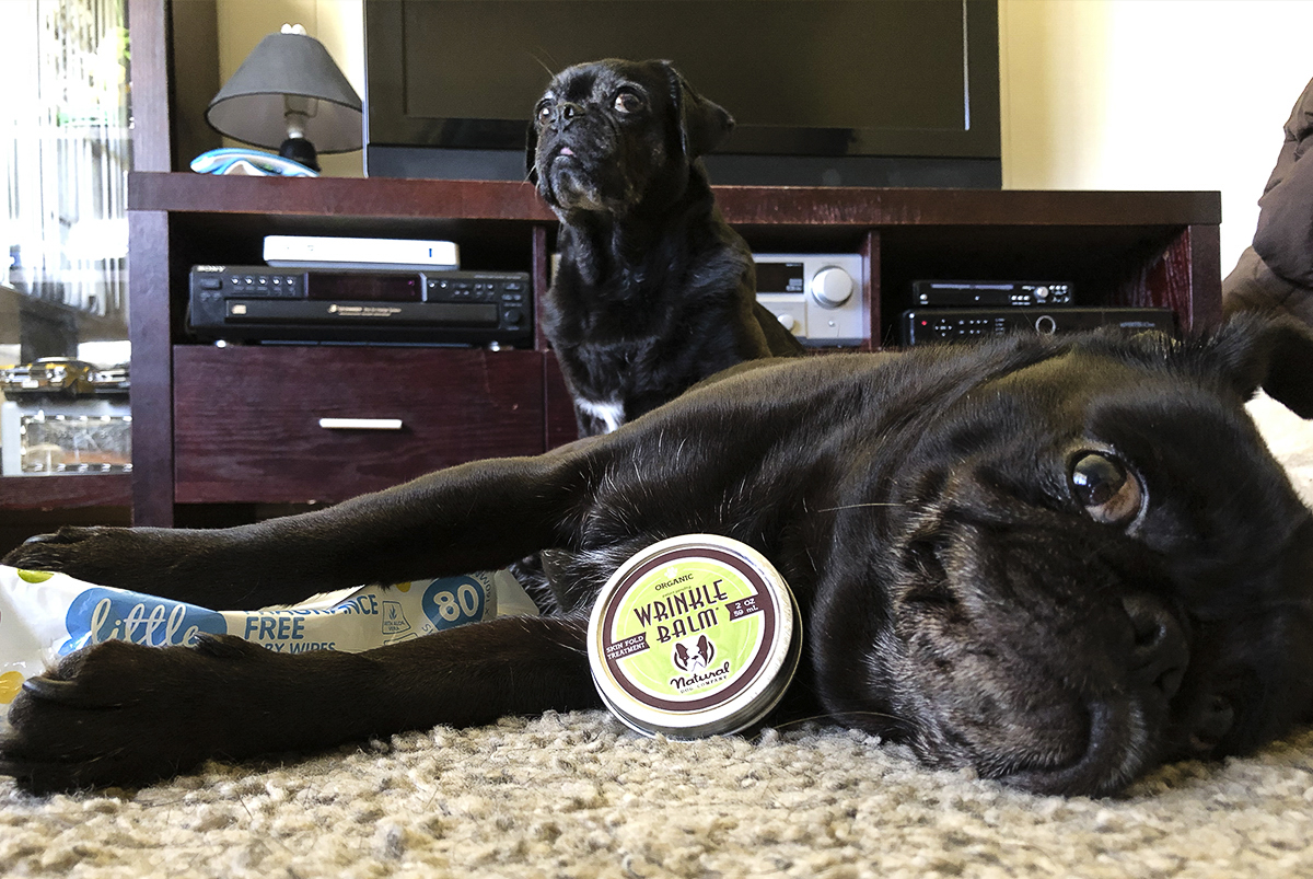 10 Essential Tools Grooming for Pugs Part 2 | www.thepugdiary.com