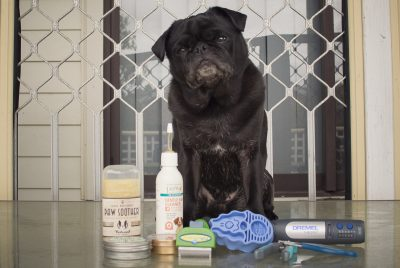 10 Essential Tools Grooming for Pugs Part 1 | www.thepugdiary.com