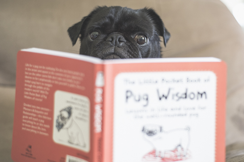 10 Must Own Books Starring Pugs | www.thepugdiary.com