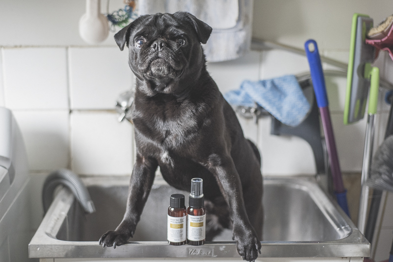 12 Essential Products for Your Pug | www.thepugdiary.com