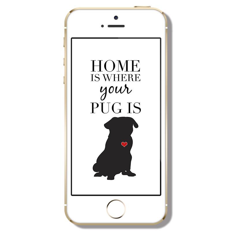 Home is Where Your Pug Is Phone Wallpaper | www.thepugdiary.com