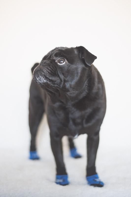 Ref the Pug | www.thepugdiary.com