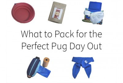 What to Pack for the Perfect Pug Day Out | www.thepugdiary.com
