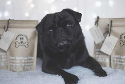 Barking Obito Treats Review | www.thepugdiary.com