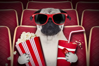 7 Movies to Watch Starring Pugs | www.thepugdiary