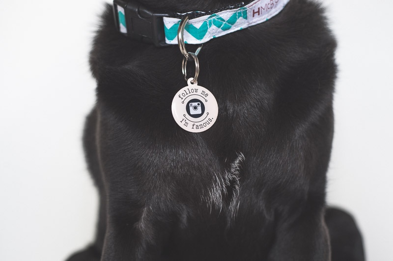 Importance of ID Tags & Collars | www.thepugdiary.com