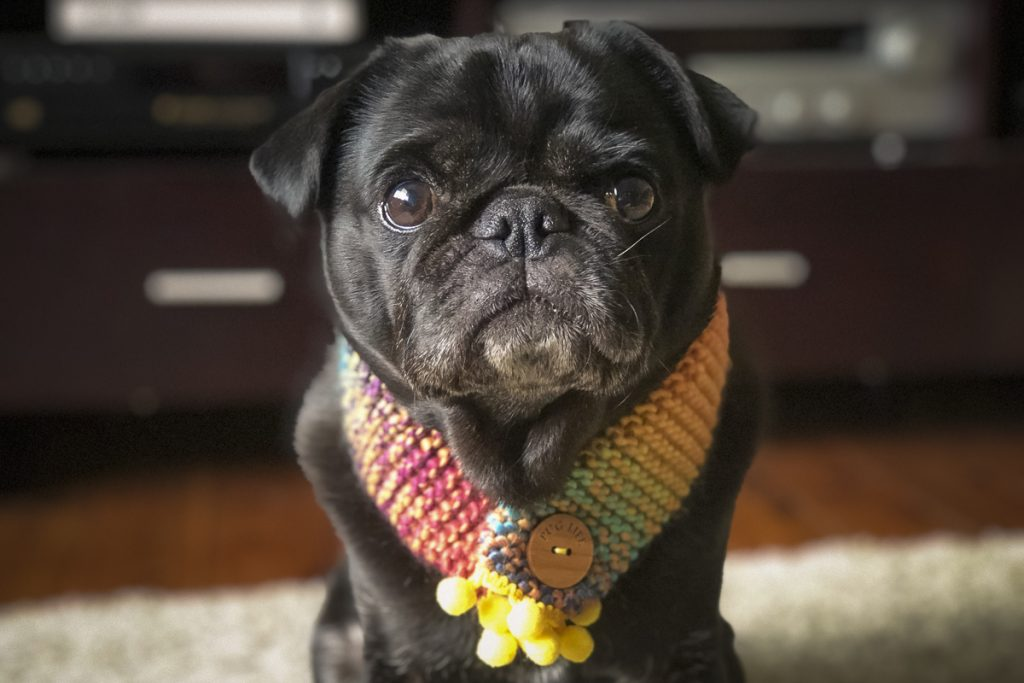 2018 Holiday Gift Guide: Pug Edition | www.thepugdiary.com