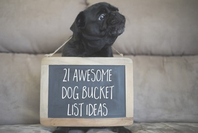 21 Awesome Dog Bucket List Ideas for Your Pug | www.thepugdiary.com