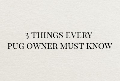 3 Things Every Pug Owner Must Know | www.thepugdiary.com