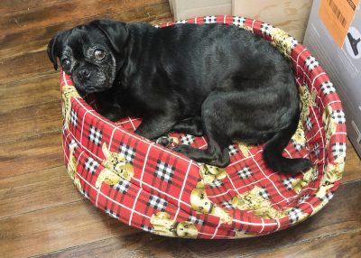 3 Things My Puppy Farm Breeding Pug Missed Out On Growing Up | www.thepugdiary.com
