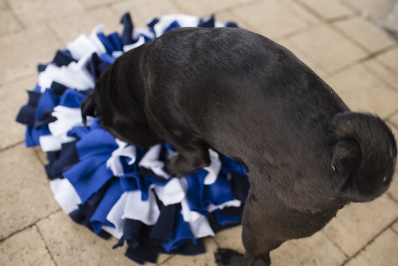 5 Enrichment Activities to Keep Your Pug's Mind Healthy   www.thepugdiary.com