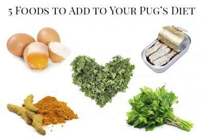 5 Foods To Add To Your Pug's Diet | www.thepugdiary.com