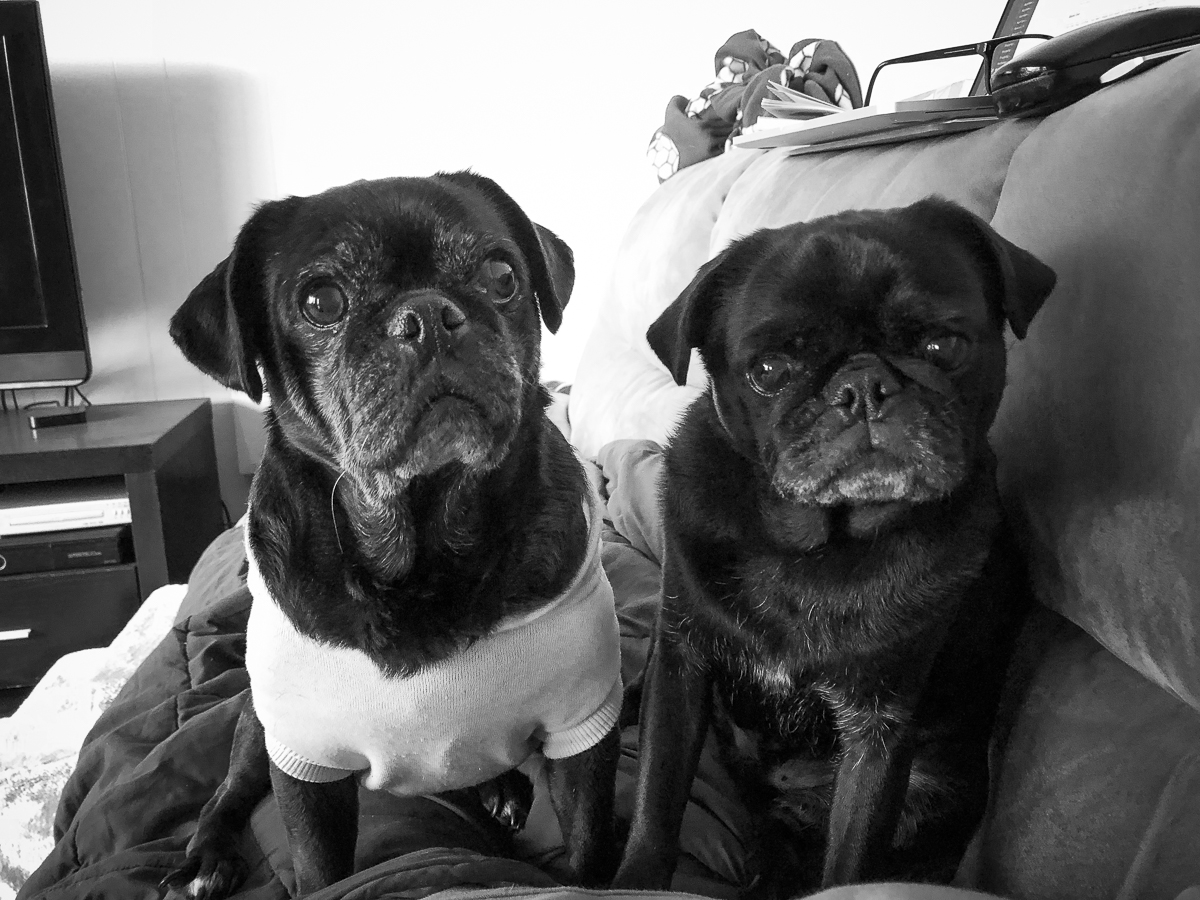 5 More Things I Never Thought My Rescue Pug Would Do | www.thepugdiary.com