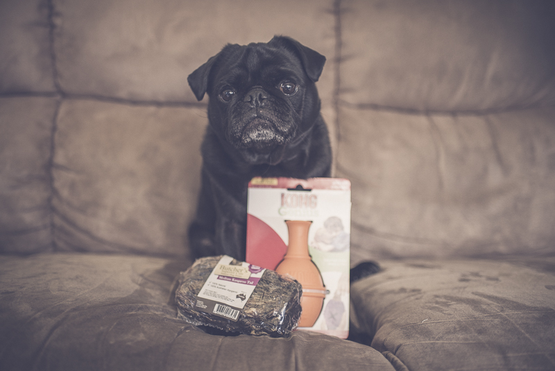 5 Ways to Celebrate Your Pug During Pugtober | www.thepugdiary.com