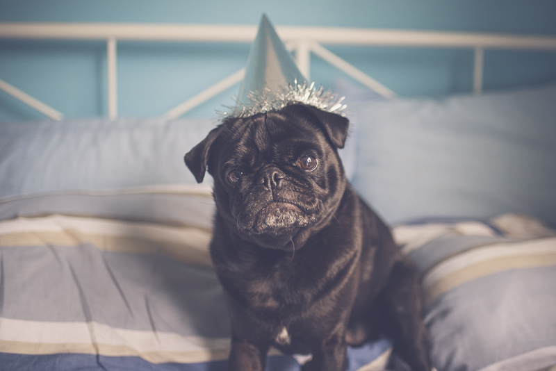 5 Ways to Celebrate Your Dog's Birthday | www.thepugdiary.com