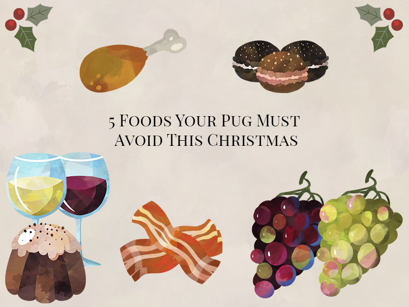 5 Foods Your Pug Must Avoid This Christmas | www.thepugdiary.com