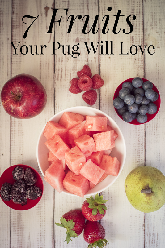 7 Fruits Your Pug Will Love This Summer   www.thepugdiary.com