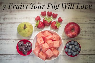 7 Fruits Your Pug Will Love This Summer | www.thepugdiary.com