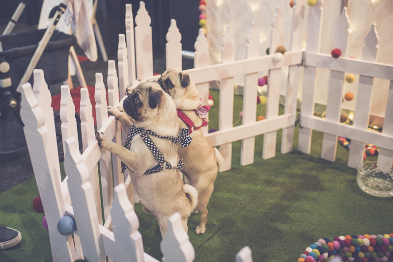 A Pooch Affair 2016 in Review | www.thepugdiary.com