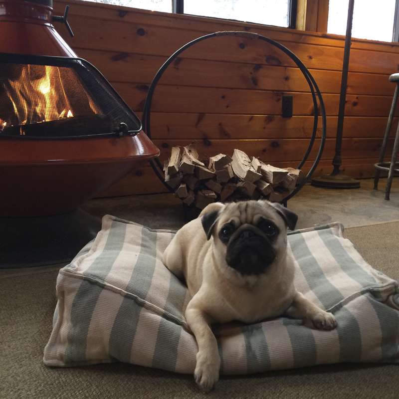 How to Choose Pet Friendly Accommodation | www.thepugdiary.com