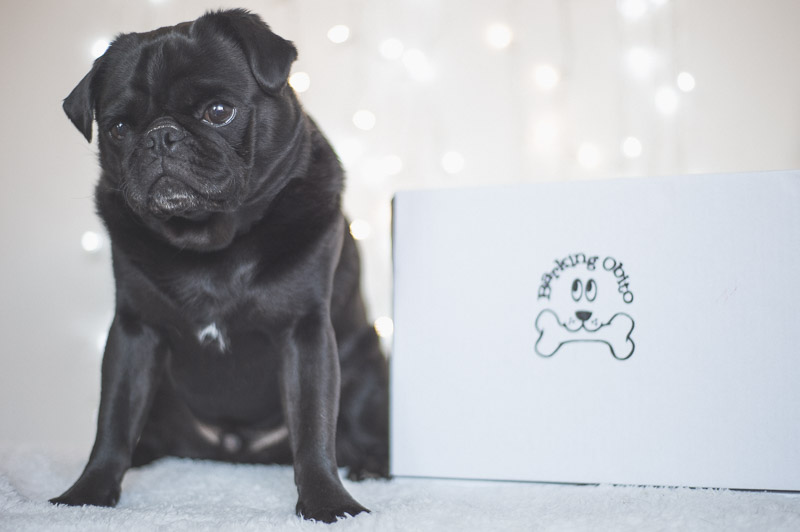 Review of Barking Obito Treats | www.thepugdiary.com