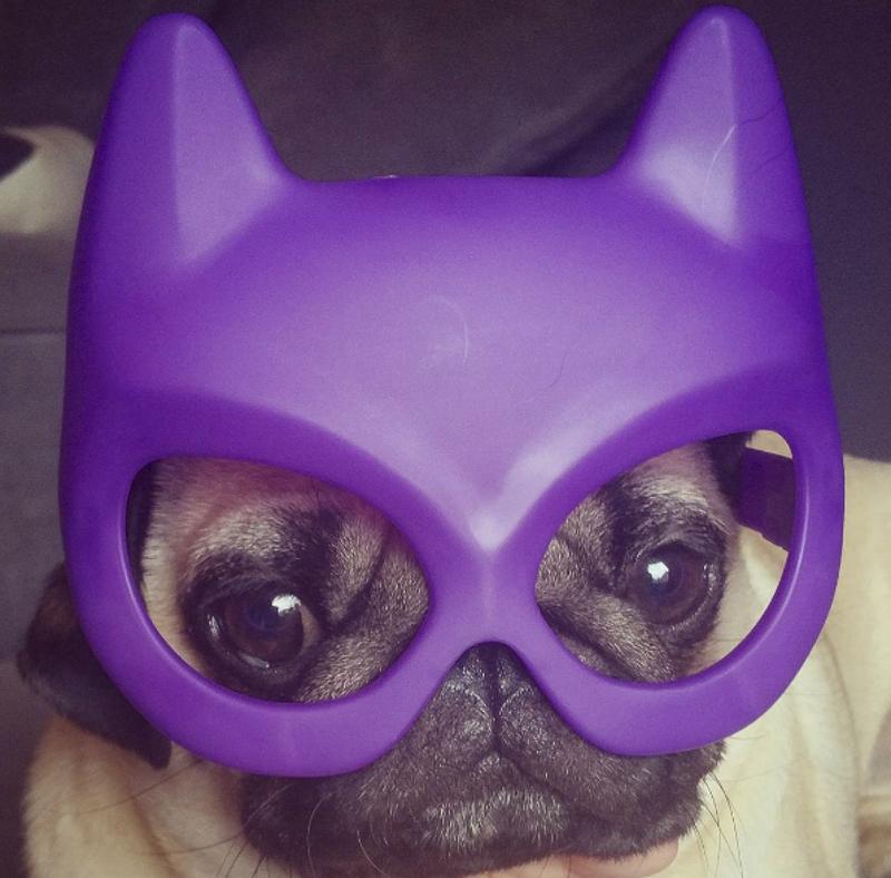 Barry's Social Pug Profile | www.thepugdiary.com