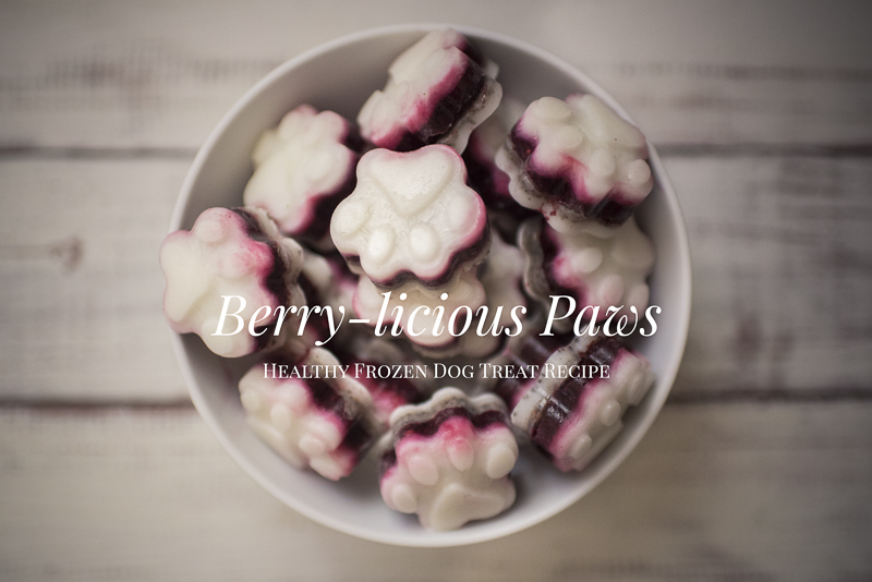 Berry-licious Paws | Healthy Frozen Dog Treat Recipe - www.thepugdiary.com