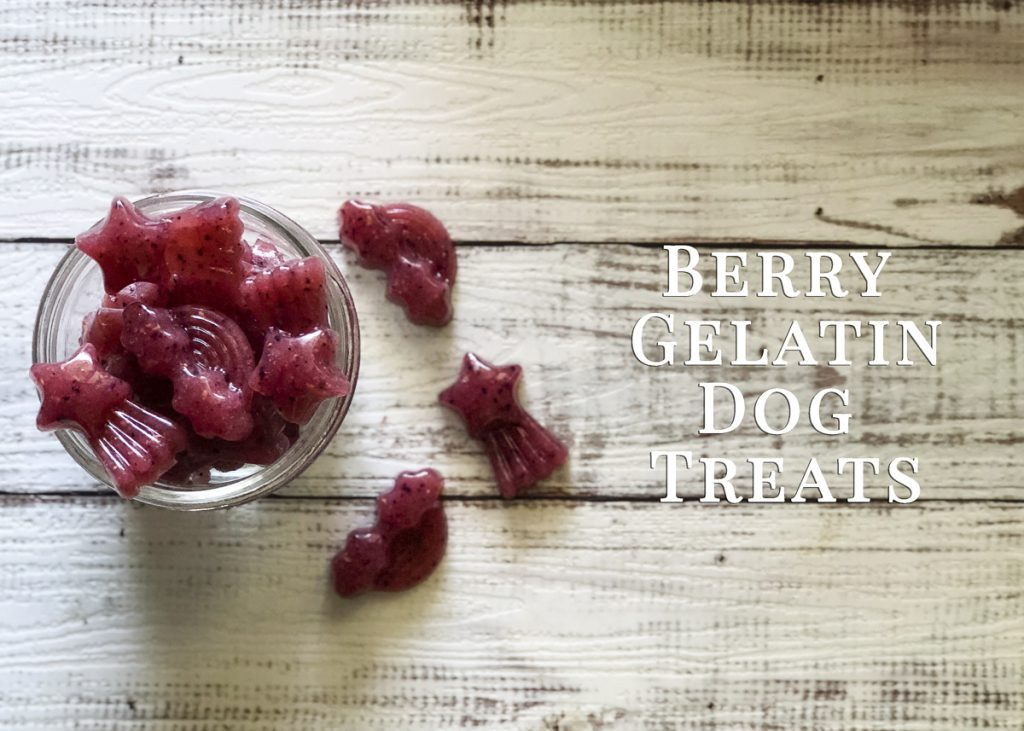 Berry Gelatin Dog Treat Recipe | www.thepugdiary.com