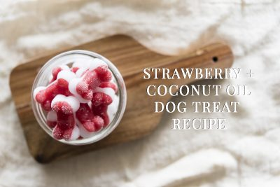 Strawberry + Coconut Oil Dog Treat Recipe | www.thepugdiary.com