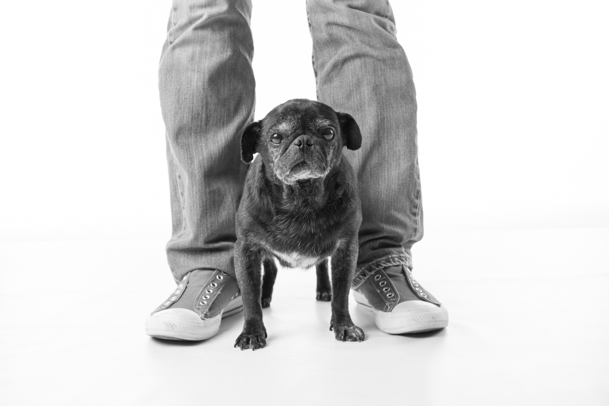 Bubbles + Chester Pug Photography by Fog Dog Studios | www.thepugdiary.com