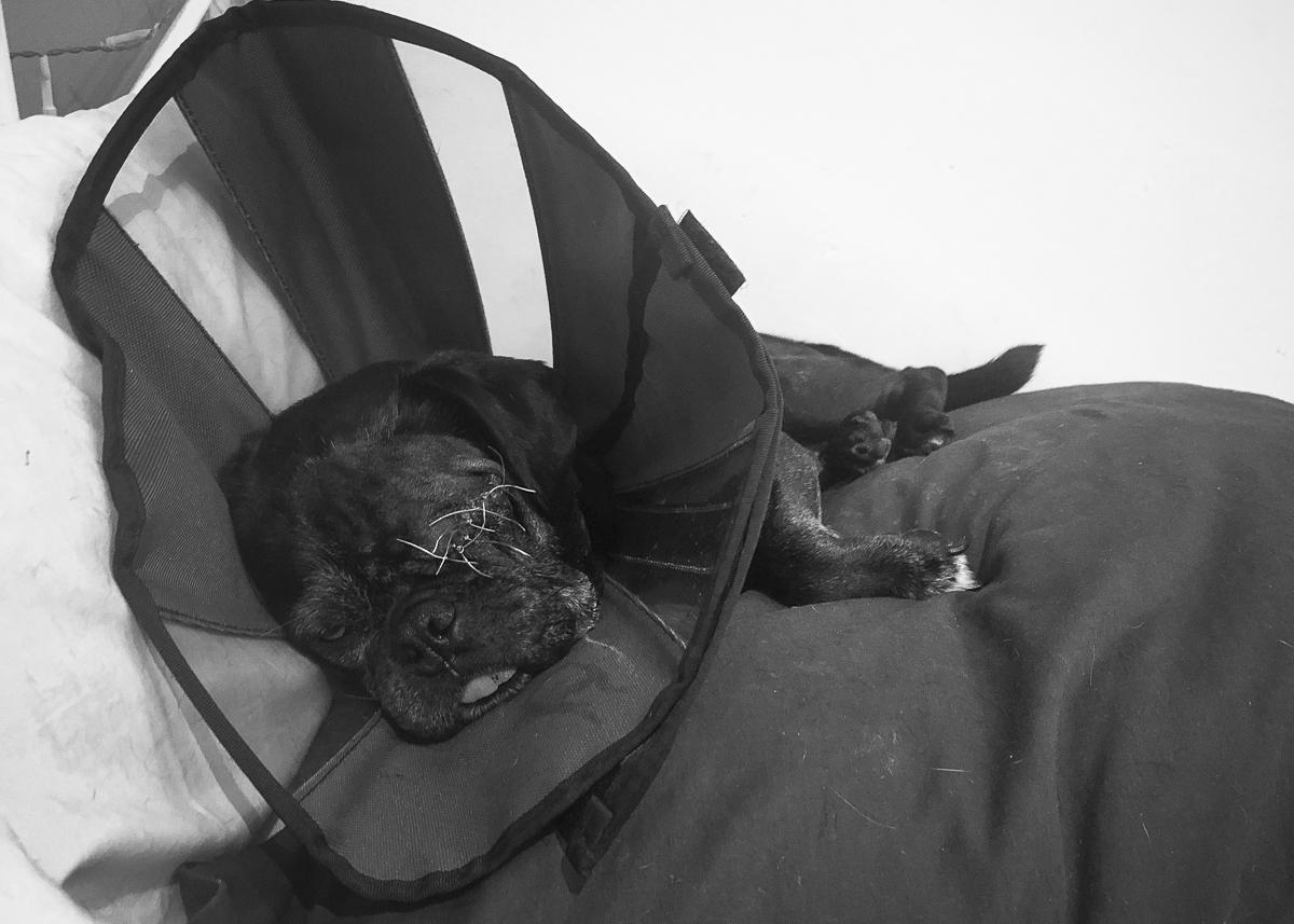 Confessions of a Pug Mum: A Hard Decision | www.thepugdiary.com