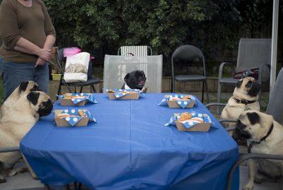 Confessions of a Pug Mum: Pug Parties | www.thepugdiary.com