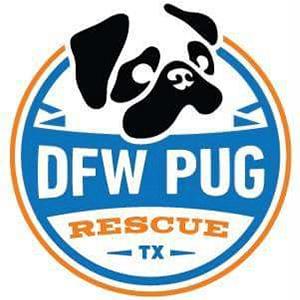 DFW Pug Rescue | www.thepugdiary.com