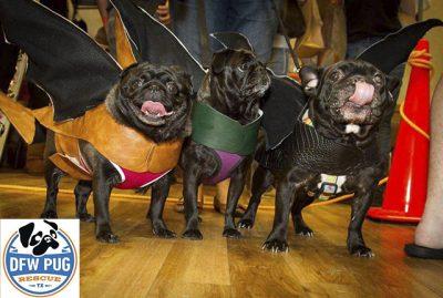 DFW Pug Rescue Club's Pug Rescue | www.thepugdiary.com