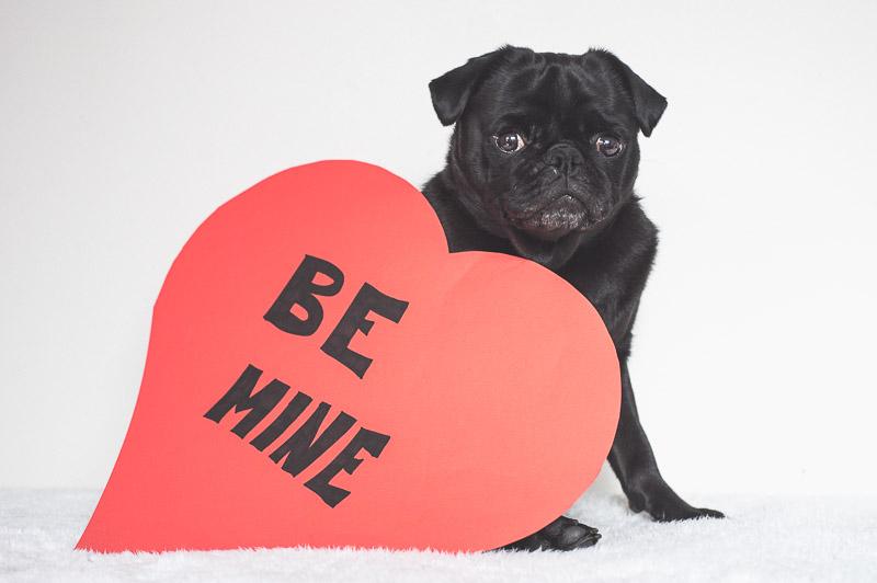 DIY Valentine Pug Photo Props | www.thepugdiary.com