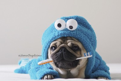 August is Pet Dental Health Month | www.thepugdiary.com