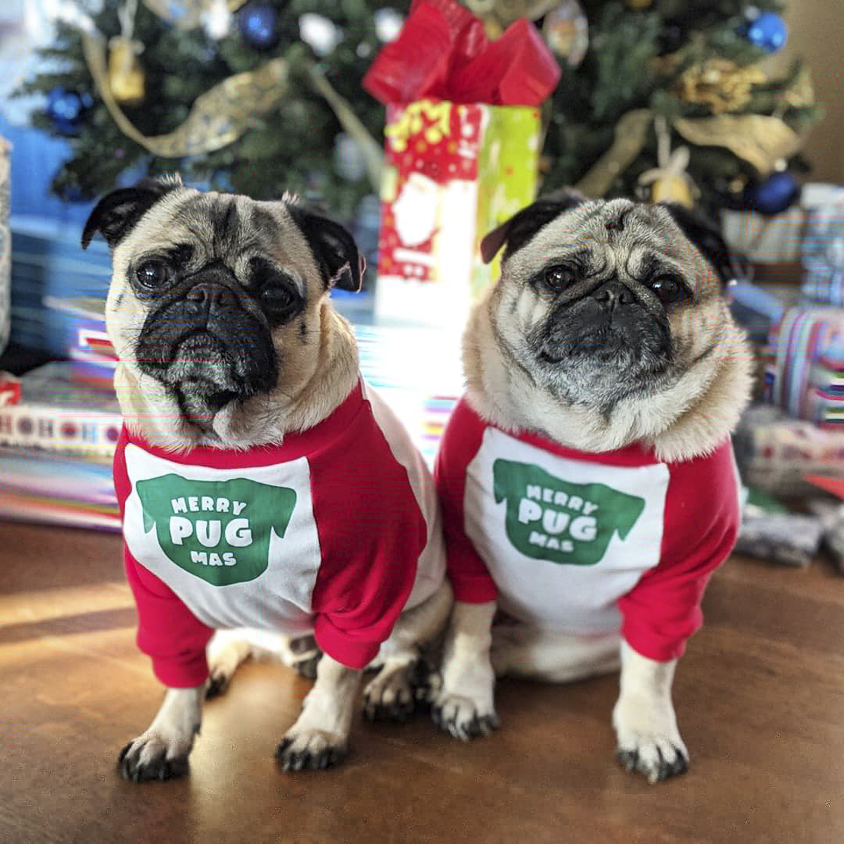 Dexter + Walter's Social Pug Profile | www.thepugdiary.com