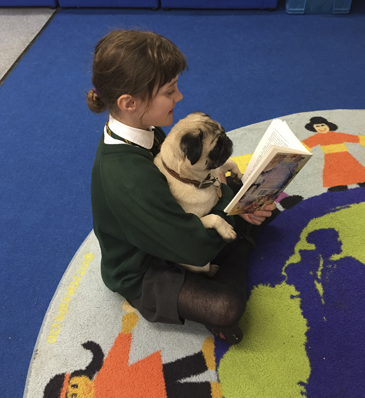Doug the Pug Therapy Dog Makes A Difference to Many Lives | www.thepugdiary.com
