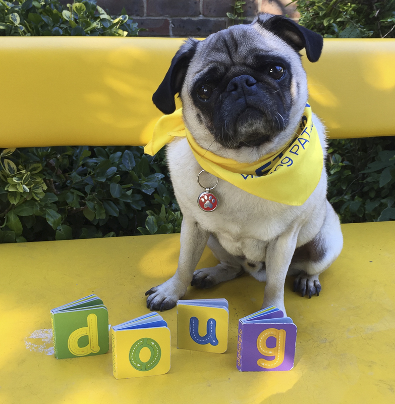 Doug the Pug Therapy Dog's Social Pug Profile | www.thepugdiary.com