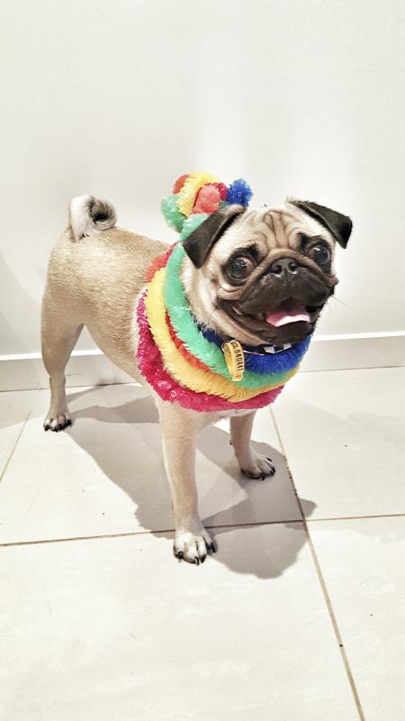 Douglas Von Puglas' Social Pug Profile | www.thepugdiary.com