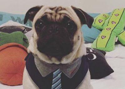 Edward's Social Pug Profile | www.thepugdiary.com