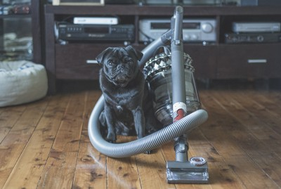 3 Tips for Minimising Pug Hair Around the House | www.thepugdiary.com