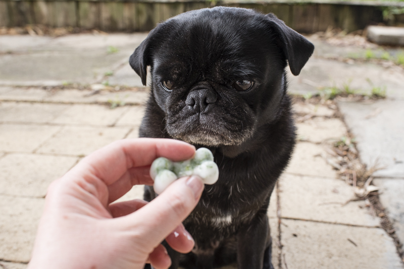 Fresh Breath Dog Treats Recipe | www.thepugdiary.com