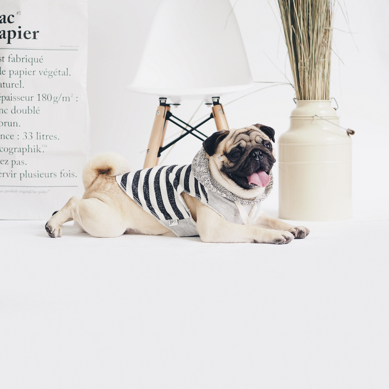 Garçon & Manzo's Social Pug Profile | www.thepugdiary.com