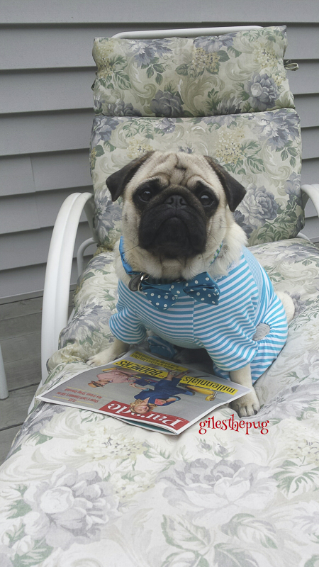 Giles' Social Pug Profile | www.thepugdiary.com