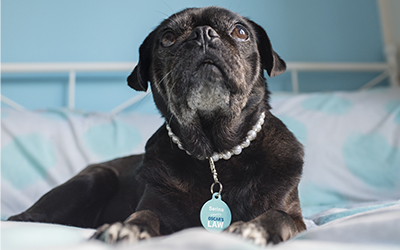 Home_Pug_Buttons_Rescue