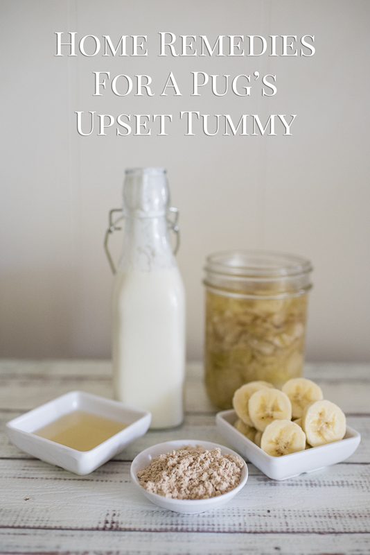 Home Remedies for A Pug's Upset Tummy | www.thepugdiary.com