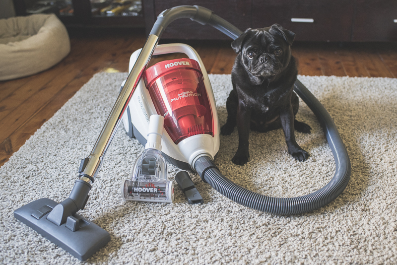 Review: Hoover Pets Bagless Vacuum - The Budget Friendly Pet Vacuum | www.thepugdiary.com