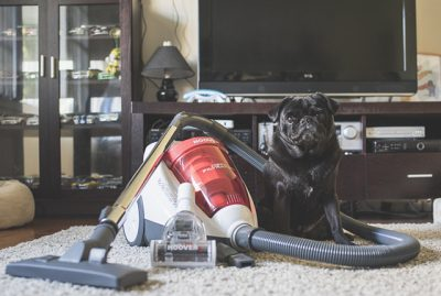 Review: Hoover Pets Bagless Vacuum | www.thepugdiary.com