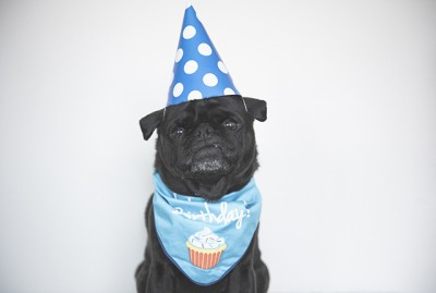 How to Organise a Pug Birthday Party + Puguccino Recipe | www.thepugdiary.com